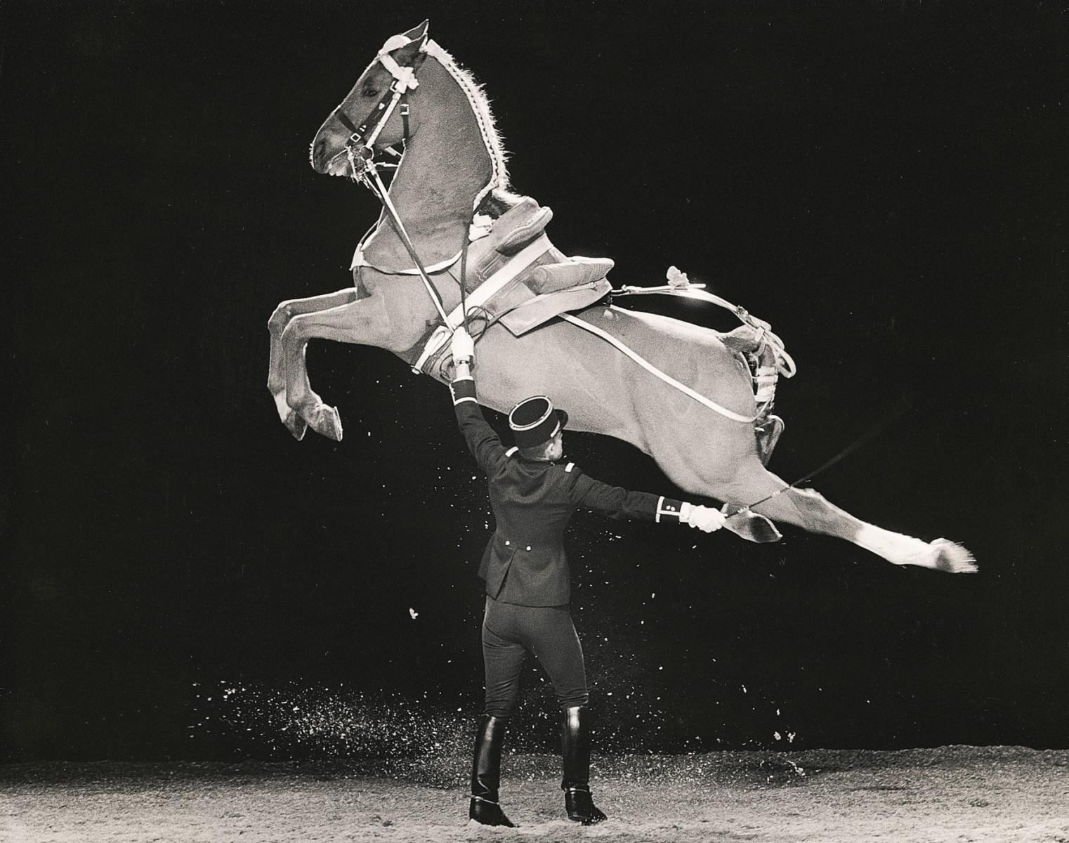 flowersway voyages visite ecole nationale d equitation le cadre noir de saumur